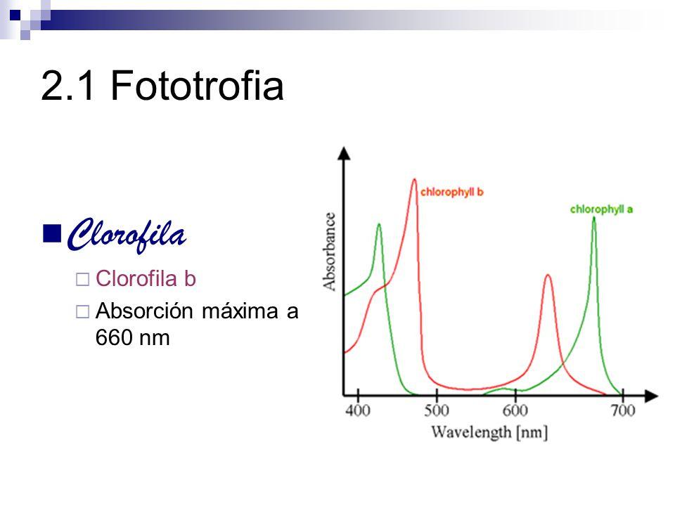 2.1 Fototrofia Clorofila Procariotas Cianobacterias clorofila a Fotótrofos anoxigénicos bacterias rojas y verdes bacterioclorofilas a y b