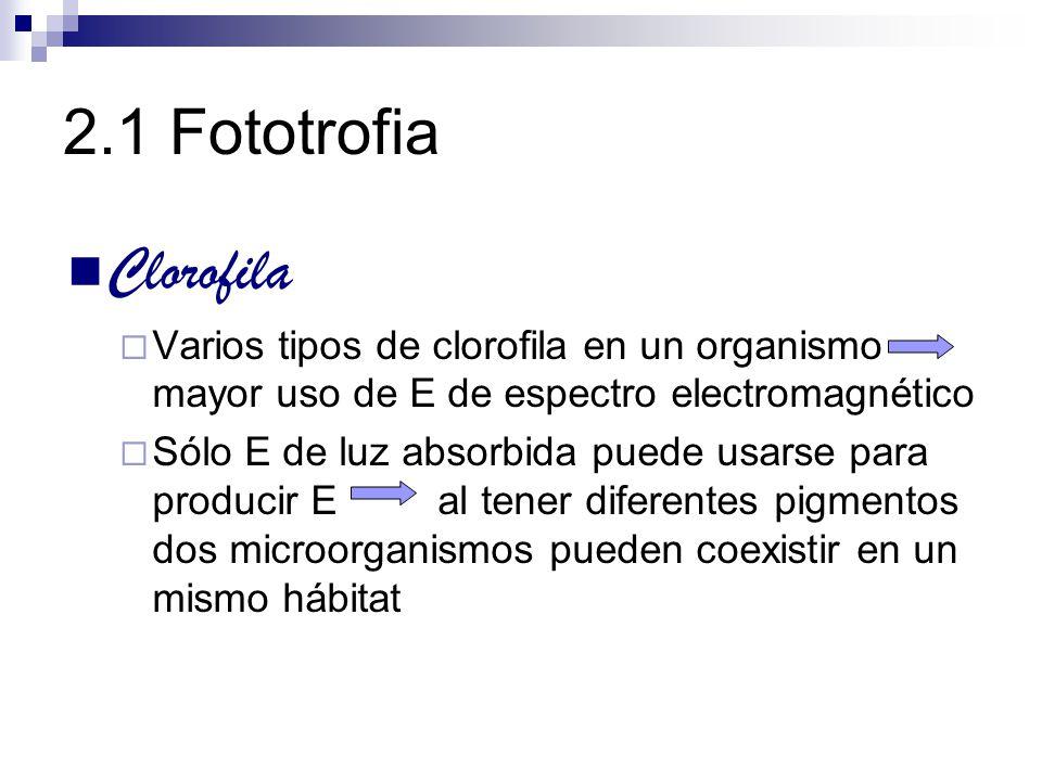 Clorofila Varios tipos de clorofila en un organismo mayor uso de E de espectro electromagnético Sólo E de luz absorbida puede usarse para producir E a