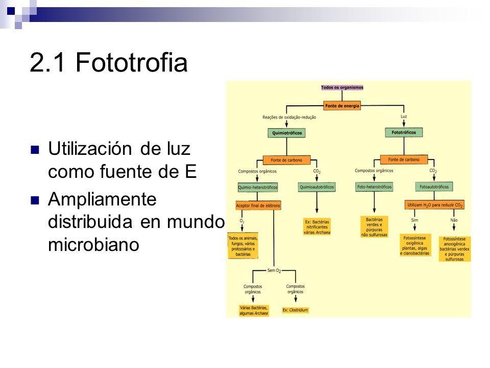 2.1 Fototrofia Fotosíntesis Conversión de E lum en E quim Organismos que realizan fotosíntesis fotótrofos Fotoautótrofos CO 2 mayoría Fotoheterótrofos C orgánico