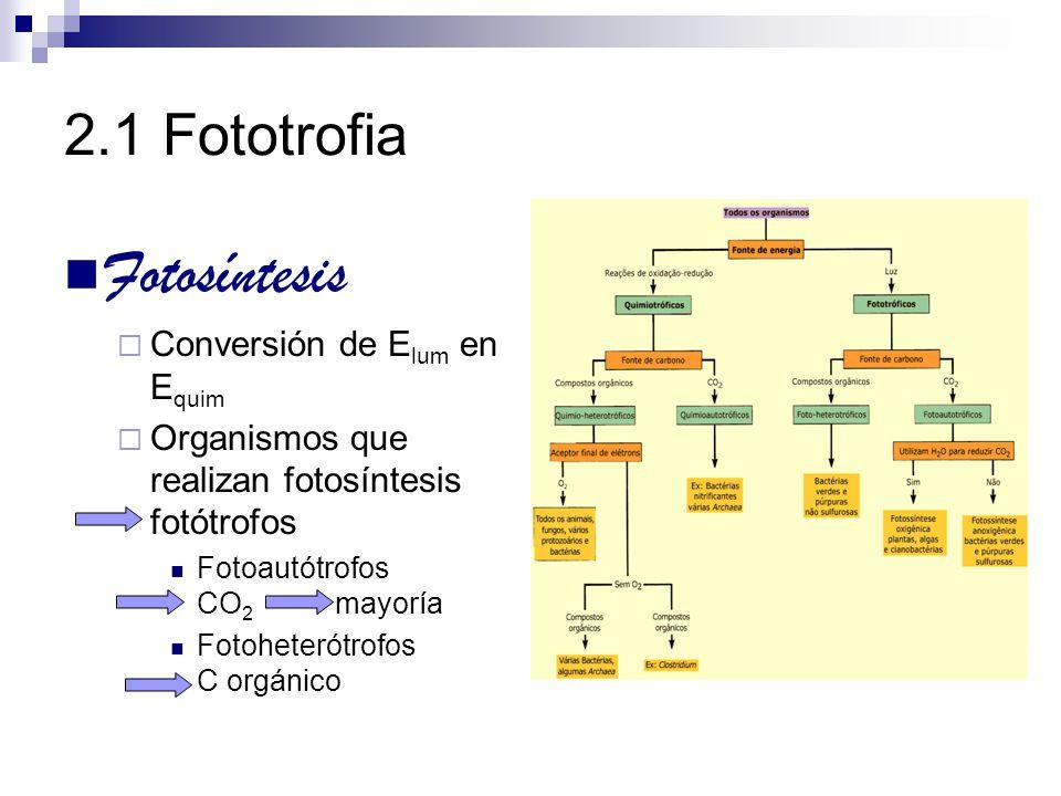 2.1 Fototrofia Fotosíntesis Depende de presencia de pigmentos fotosensibles clorofilas Plantas Algas Algunas bacterias Pigmentos accesorios Carotenoides Ficobilinas