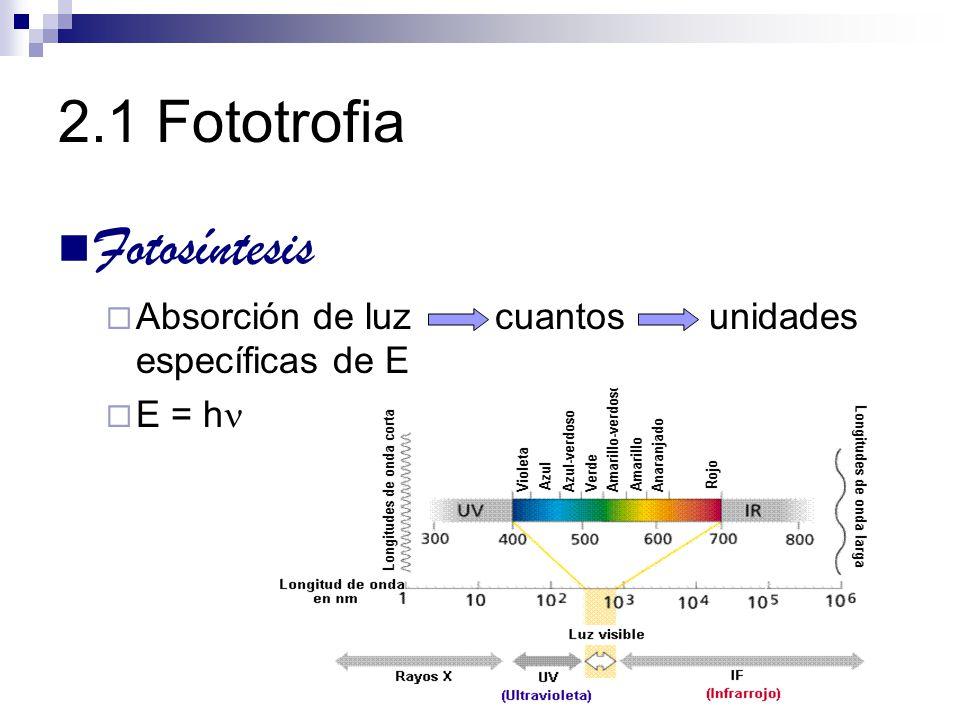 2.1 Fototrofia Fotosíntesis Reacciones Fase luminosa E lum se conserva como E quim Fase oscura E quim se utiliza para reducir CO 2 a compuestos orgánicos