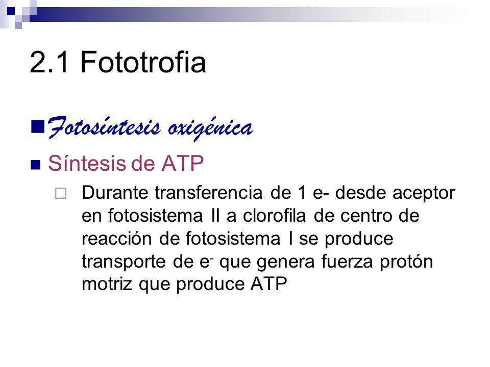 2.1 Fototrofia Fotosíntesis oxigénica Síntesis de ATP Durante transferencia de 1 e- desde aceptor en fotosistema II a clorofila de centro de reacción