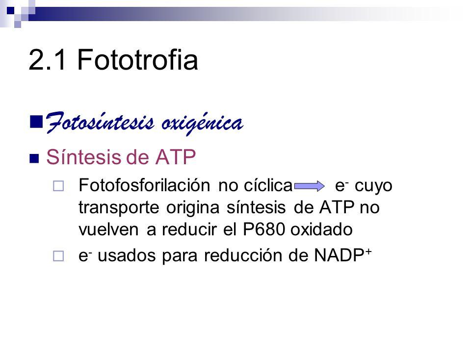 2.1 Fototrofia Fotosíntesis oxigénica Síntesis de ATP Fotofosforilación no cíclica e - cuyo transporte origina síntesis de ATP no vuelven a reducir el