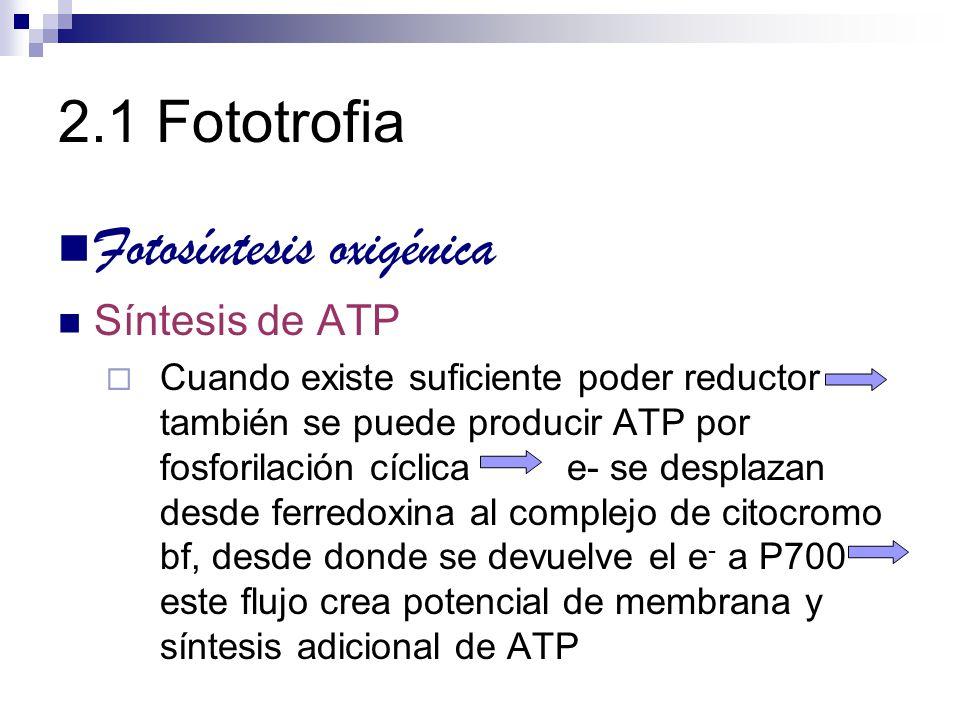 2.1 Fototrofia Fotosíntesis oxigénica Síntesis de ATP Cuando existe suficiente poder reductor también se puede producir ATP por fosforilación cíclica