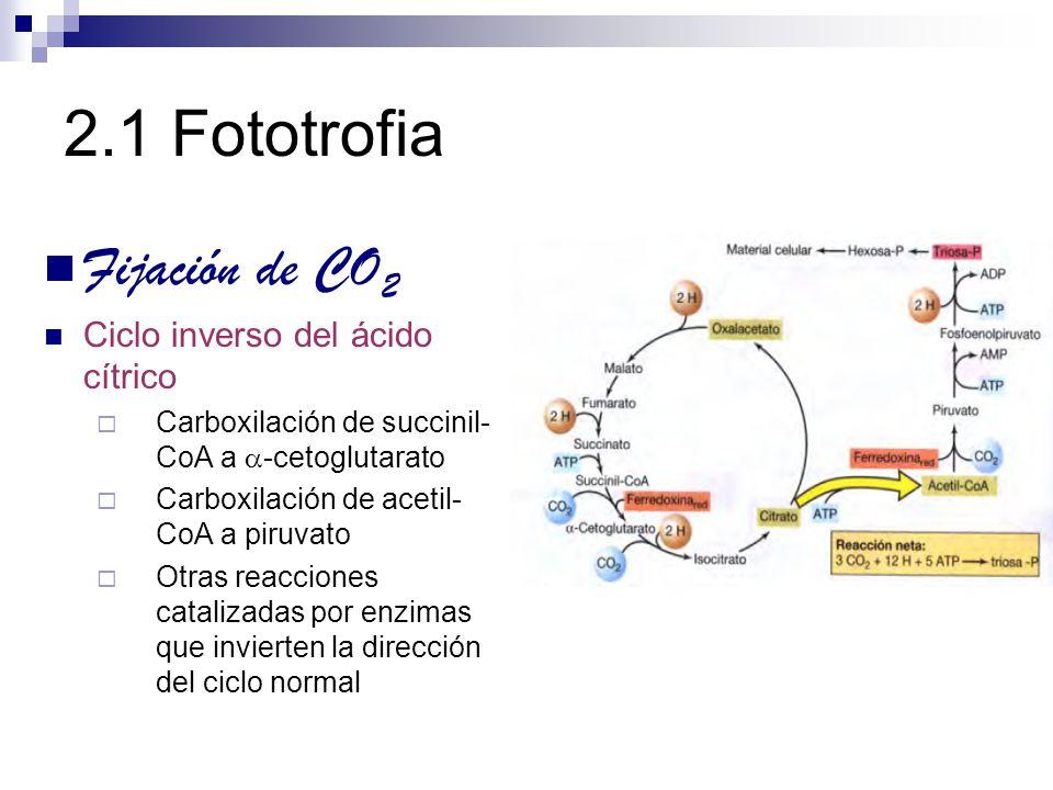 2.1 Fototrofia Fijación de CO 2 Ciclo inverso del ácido cítrico Carboxilación de succinil- CoA a -cetoglutarato Carboxilación de acetil- CoA a piruvat
