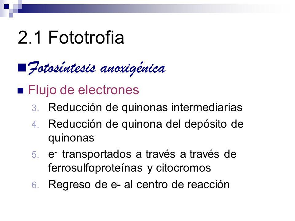 2.1 Fototrofia Fotosíntesis anoxigénica Flujo de electrones 3. Reducción de quinonas intermediarias 4. Reducción de quinona del depósito de quinonas 5