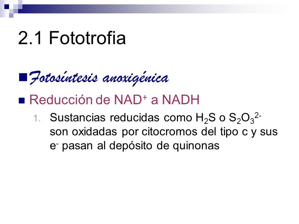 2.1 Fototrofia Fotosíntesis anoxigénica Reducción de NAD + a NADH 1. Sustancias reducidas como H 2 S o S 2 O 3 2- son oxidadas por citocromos del tipo
