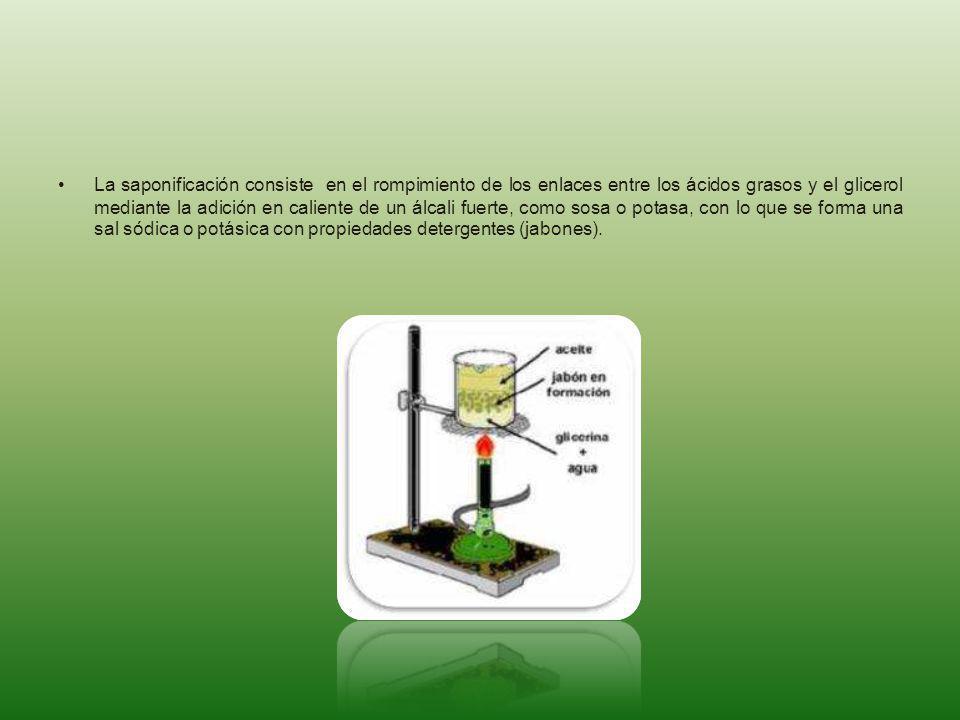 La saponificación consiste en el rompimiento de los enlaces entre los ácidos grasos y el glicerol mediante la adición en caliente de un álcali fuerte, como sosa o potasa, con lo que se forma una sal sódica o potásica con propiedades detergentes (jabones).