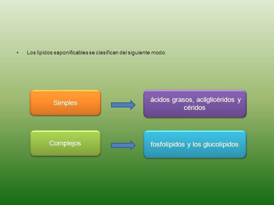 Los lípidos saponificables se clasifican del siguiente modo: Simples Complejos ácidos grasos, acilglicéridos y céridos fosfolípidos y los glucolípidos