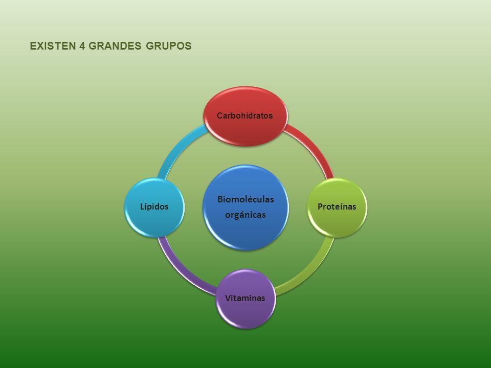 EXISTEN 4 GRANDES GRUPOS Biomoléculas orgánicas Carbohidratos ProteínasVitaminasLípidos