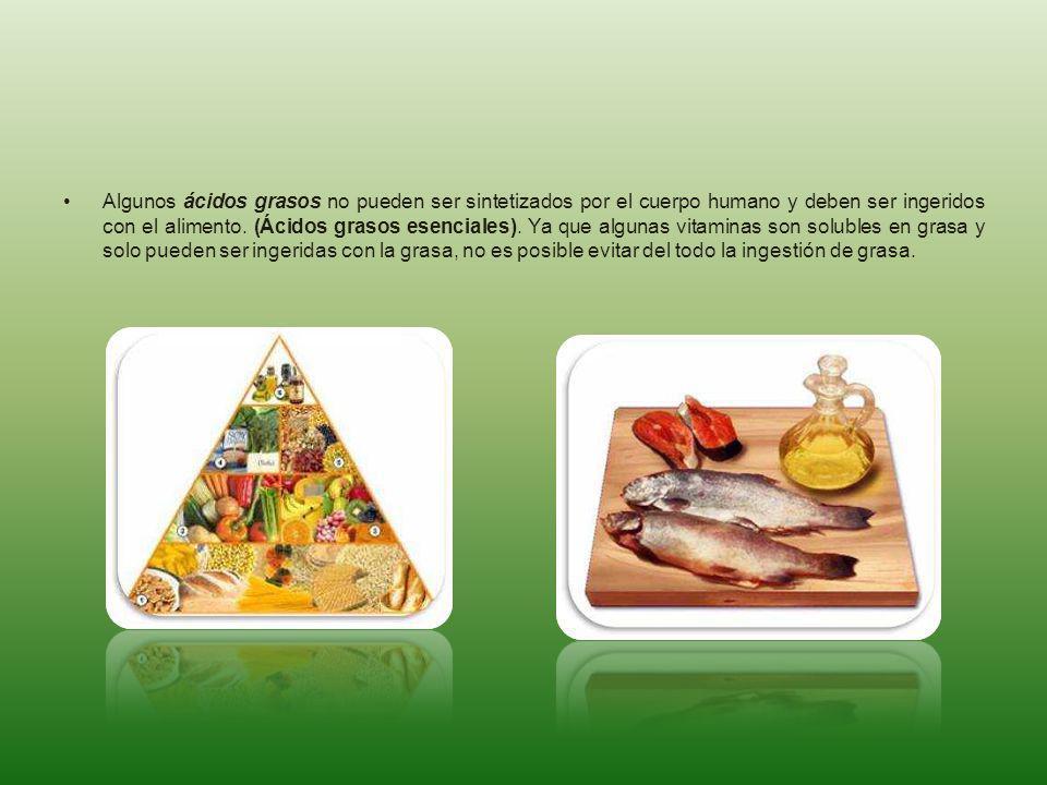 Algunos ácidos grasos no pueden ser sintetizados por el cuerpo humano y deben ser ingeridos con el alimento. (Ácidos grasos esenciales). Ya que alguna