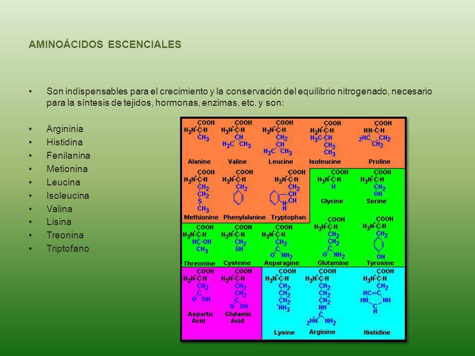 AMINOÁCIDOS ESCENCIALES Son indispensables para el crecimiento y la conservación del equilibrio nitrogenado, necesario para la síntesis de tejidos, ho