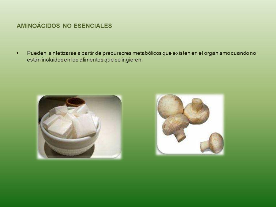 AMINOÁCIDOS NO ESENCIALES Pueden sintetizarse a partir de precursores metabólicos que existen en el organismo cuando no están incluidos en los aliment