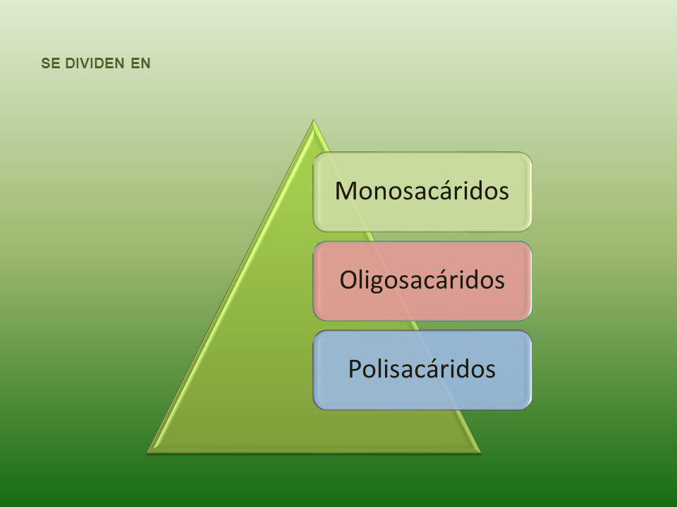 MONOSACÁRIDOS Conocidos también como azúcares simples, siendo los más importantes la Glucosa Fructuosa Galactosa Ribosa Desoxirribosa Los monosacáridos son dulces y solubles en agua.