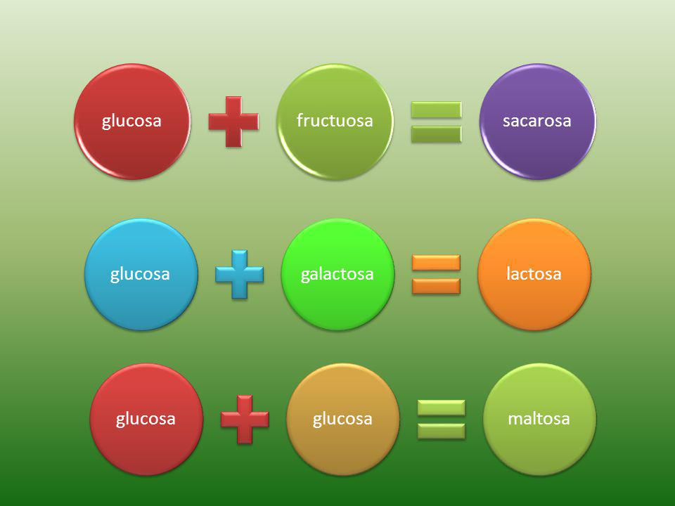 glucosafructuosasacarosa glucosagalactosalactosaglucosa maltosa