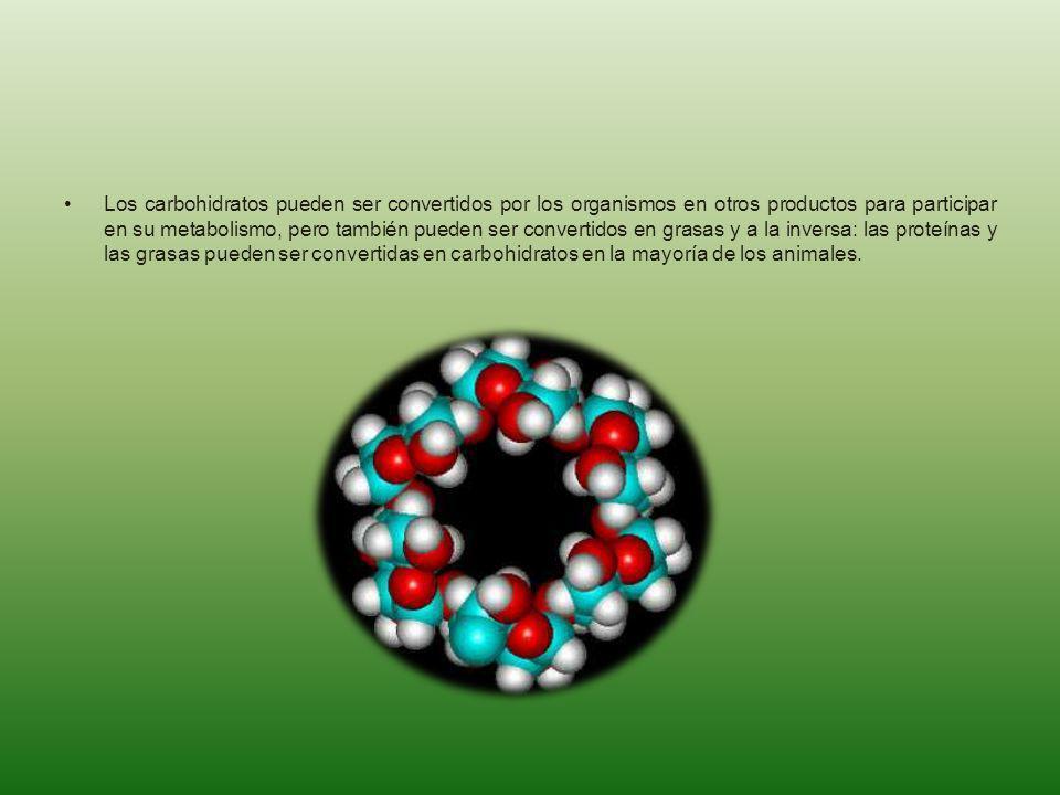 Los carbohidratos pueden ser convertidos por los organismos en otros productos para participar en su metabolismo, pero también pueden ser convertidos