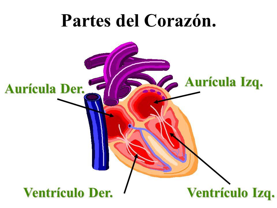 Partes del Corazón. Aurícula Izq. Aurícula Der. Ventrículo Izq. Ventrículo Der.