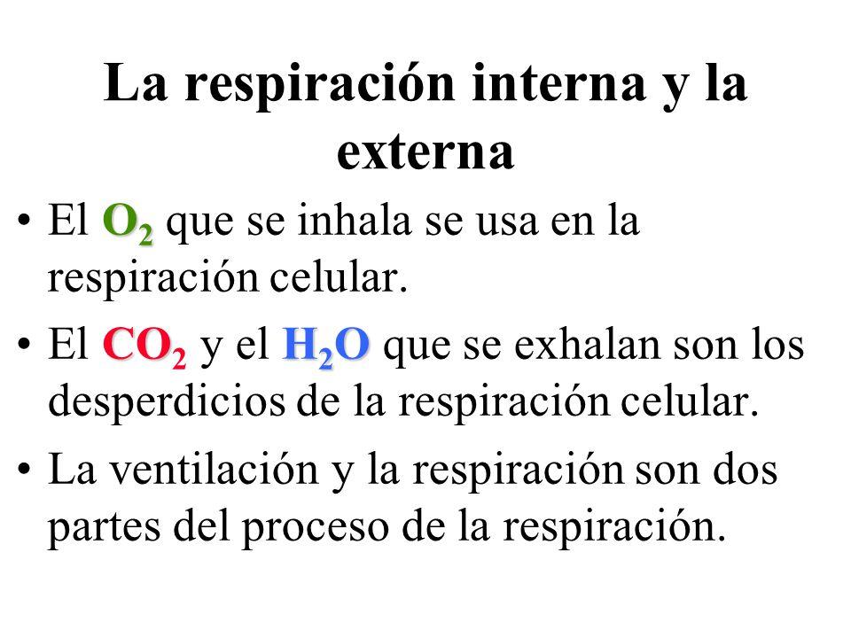 La respiración interna y la externa O 2El O 2 que se inhala se usa en la respiración celular. COH 2 OEl CO 2 y el H 2 O que se exhalan son los desperd