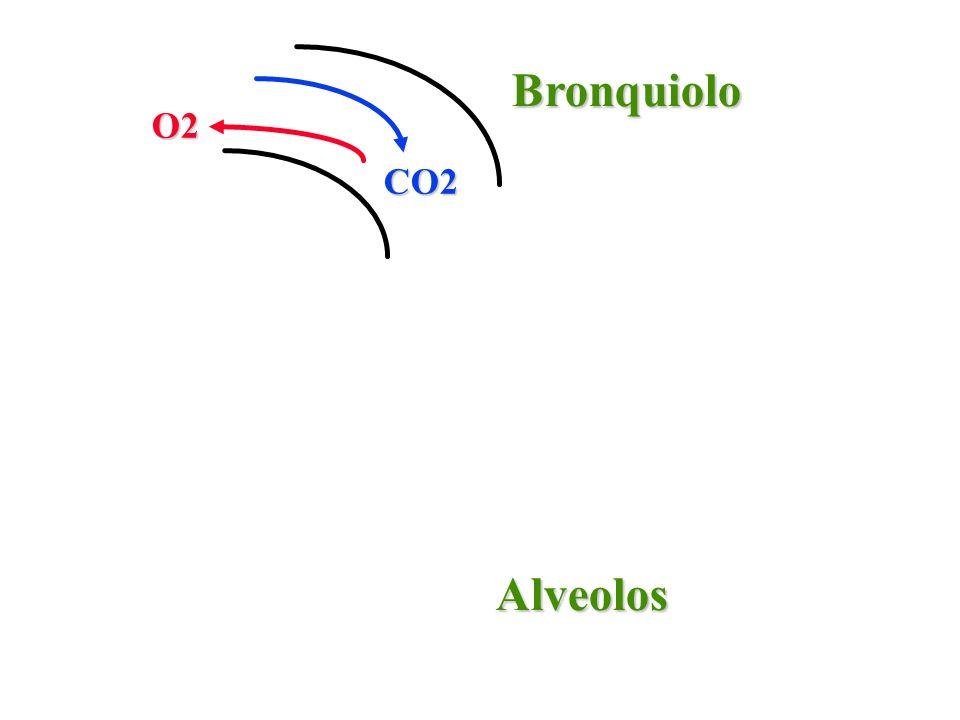 CO2 O2 Bronquiolo Alveolos