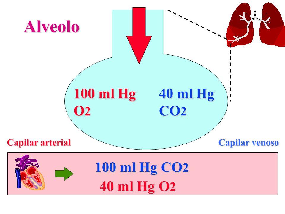 100 ml Hg O 2 Alveolo Capilar venoso Capilar arterial 40 ml Hg CO 2 40 ml Hg O 2 100 ml Hg CO 2