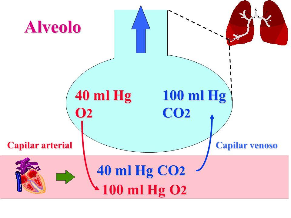 40 ml Hg O 2 Alveolo Capilar venoso Capilar arterial 100 ml Hg CO 2 100 ml Hg O 2 40 ml Hg CO 2
