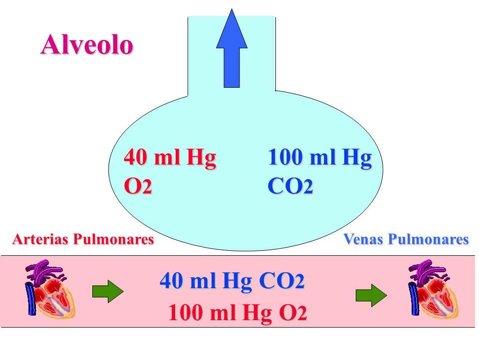Alveolo Arterias Pulmonares Venas Pulmonares 40 ml Hg O 2 100 ml Hg CO 2 100 ml Hg O 2 40 ml Hg CO 2
