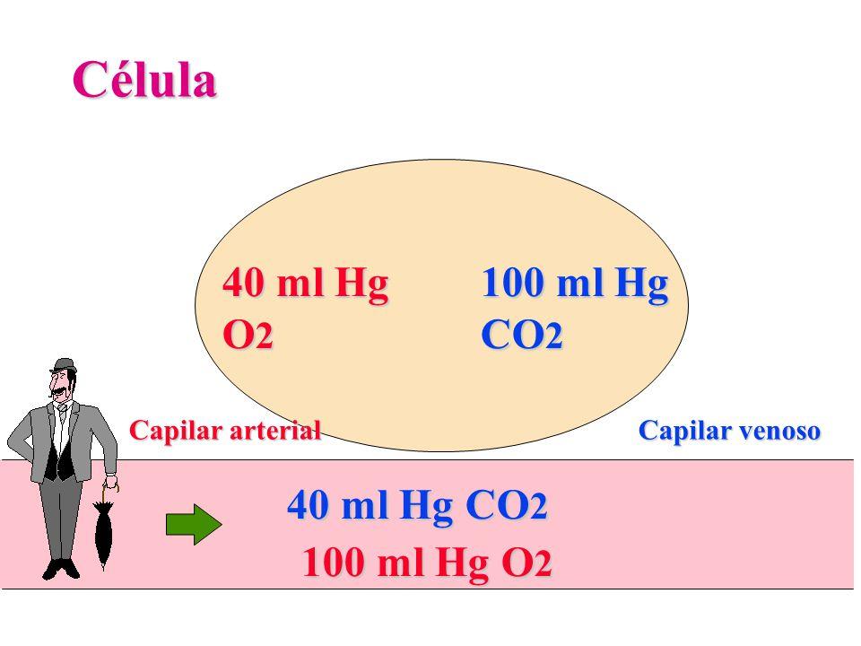 40 ml Hg O 2 Célula Capilar arterial 100 ml Hg CO 2 100 ml Hg O 2 40 ml Hg CO 2 Capilar venoso