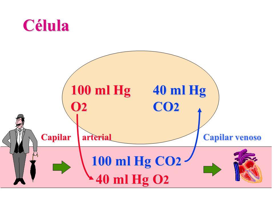 100 ml Hg O 2 Célula 40 ml Hg CO 2 40 ml Hg O 2 100 ml Hg CO 2 Capilar arterial Capilar venoso