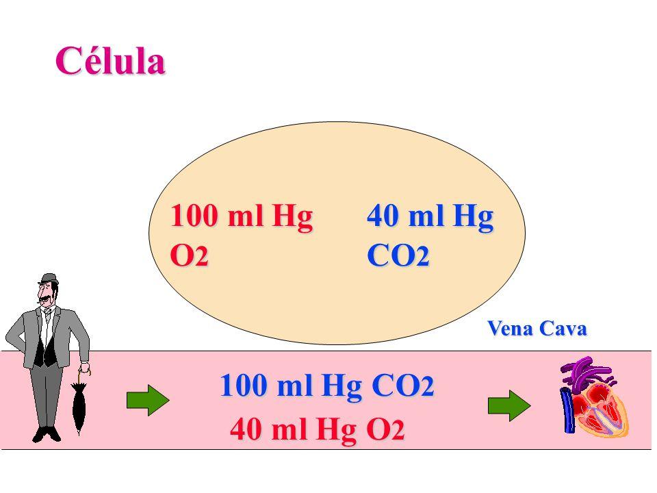 100 ml Hg O 2 Célula 40 ml Hg CO 2 40 ml Hg O 2 100 ml Hg CO 2 Vena Cava