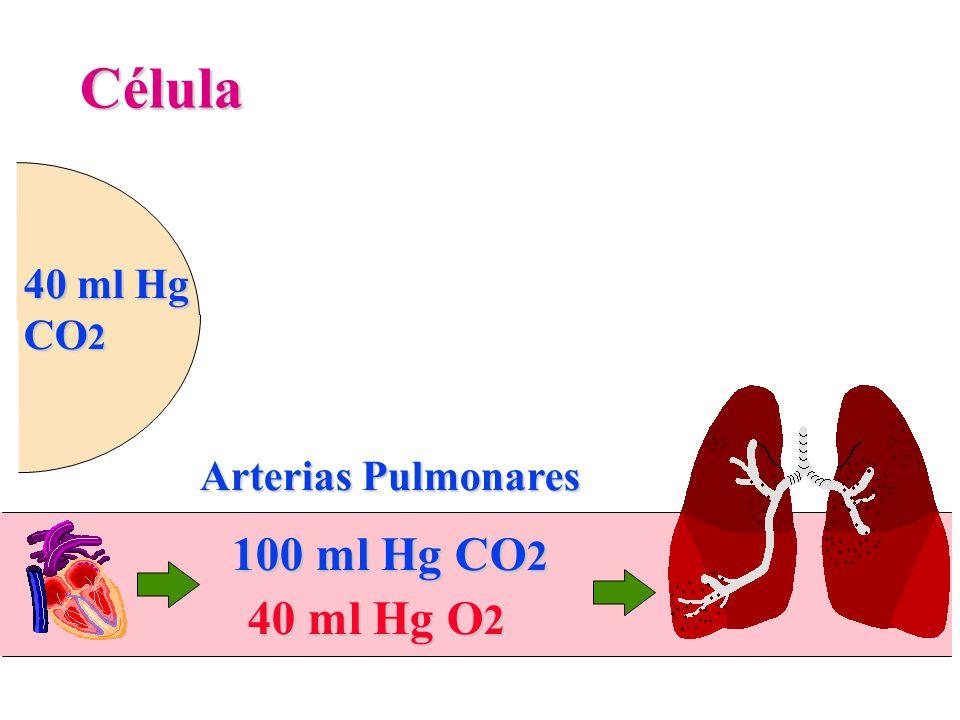 Célula 40 ml Hg O 2 100 ml Hg CO 2 Arterias Pulmonares 40 ml Hg CO 2