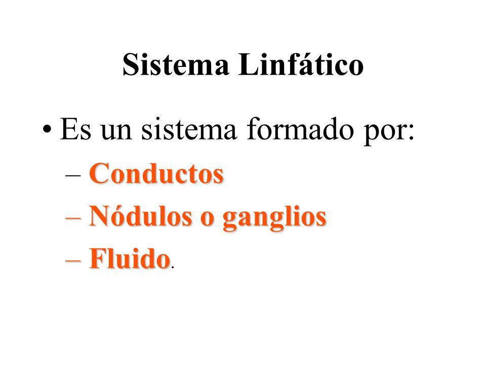 Sistema Linfático Es un sistema formado por: Conductos – Conductos – Nódulos o ganglios – Fluido – Fluido.