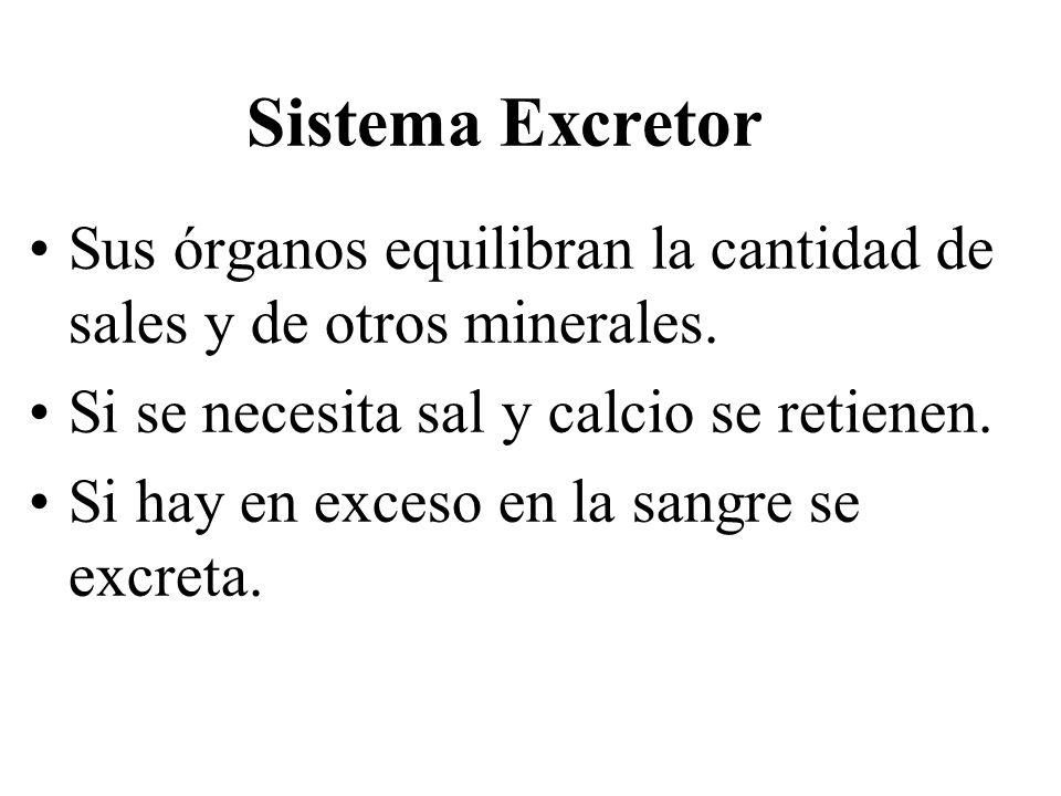 Sistema Excretor Sus órganos equilibran la cantidad de sales y de otros minerales.