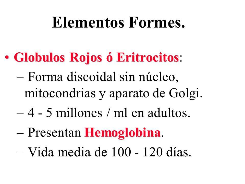 Elementos Formes. Globulos Rojos ó EritrocitosGlobulos Rojos ó Eritrocitos: – Forma discoidal sin núcleo, mitocondrias y aparato de Golgi. – 4 - 5 mil