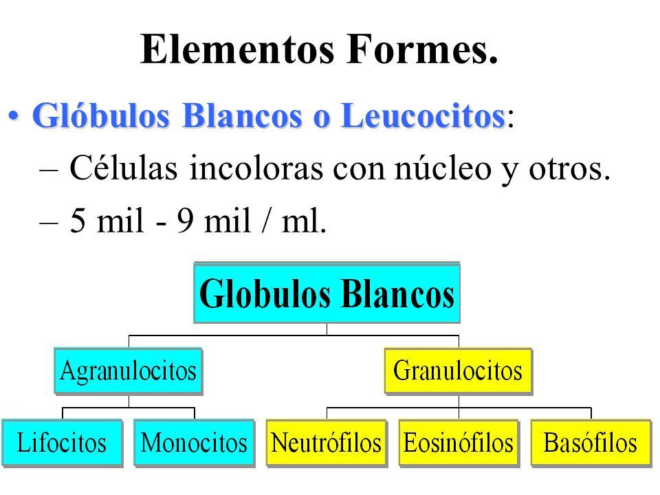 Elementos Formes. Glóbulos Blancos o LeucocitosGlóbulos Blancos o Leucocitos: – Células incoloras con núcleo y otros. – 5 mil - 9 mil / ml.