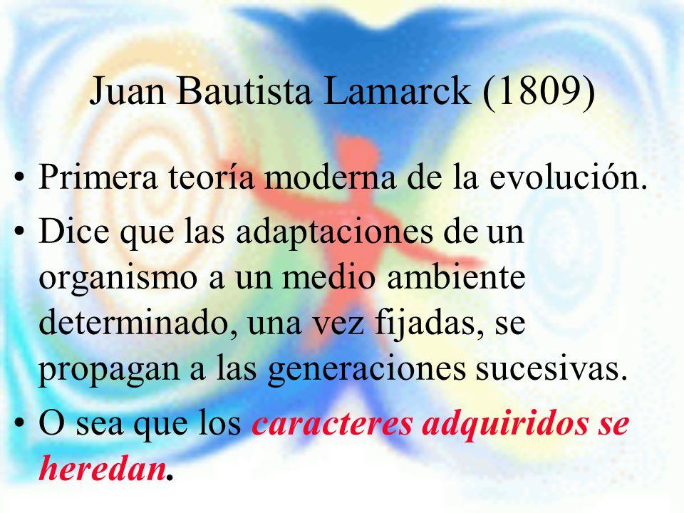 Juan Bautista Lamarck (1809) Primera teoría moderna de la evolución. Dice que las adaptaciones de un organismo a un medio ambiente determinado, una ve