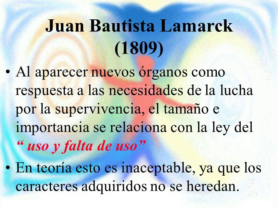 Juan Bautista Lamarck (1809) Al aparecer nuevos órganos como respuesta a las necesidades de la lucha por la supervivencia, el tamaño e importancia se