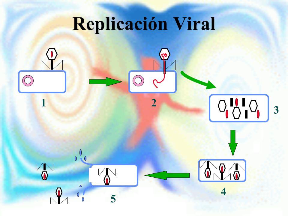 Replicación Viral 12 3 4 5