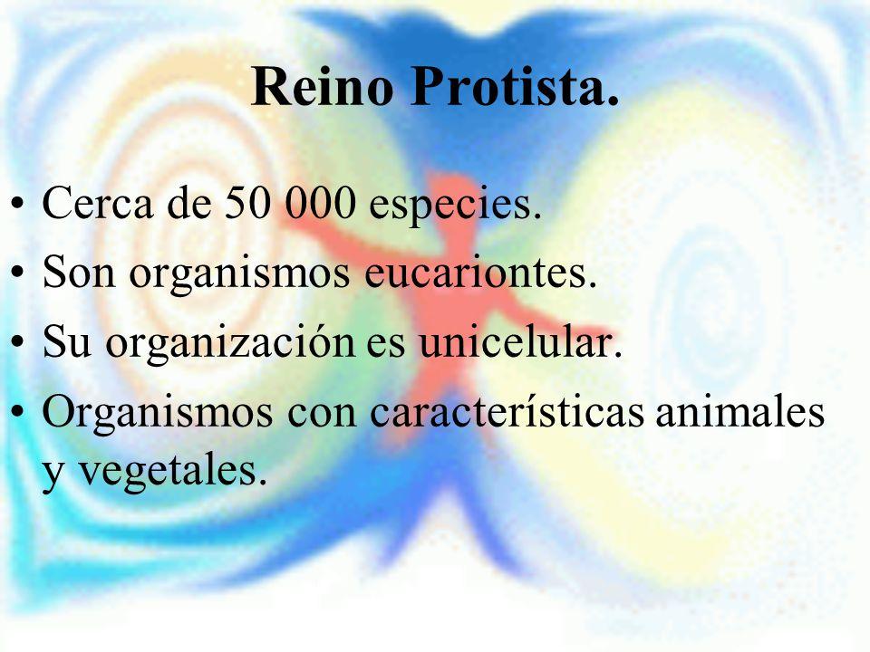 Reino Protista. Cerca de 50 000 especies. Son organismos eucariontes. Su organización es unicelular. Organismos con características animales y vegetal
