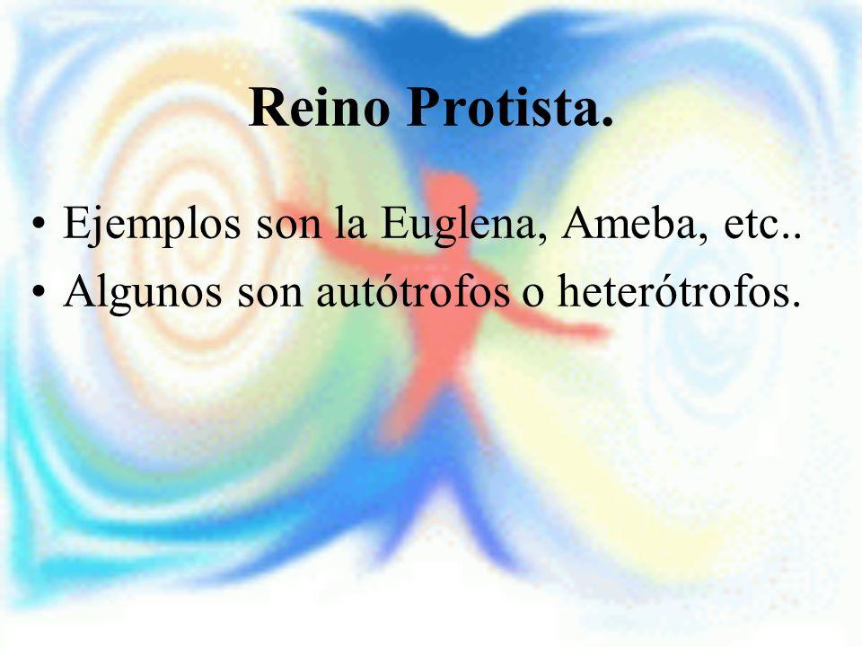 Reino Protista. Ejemplos son la Euglena, Ameba, etc.. Algunos son autótrofos o heterótrofos.