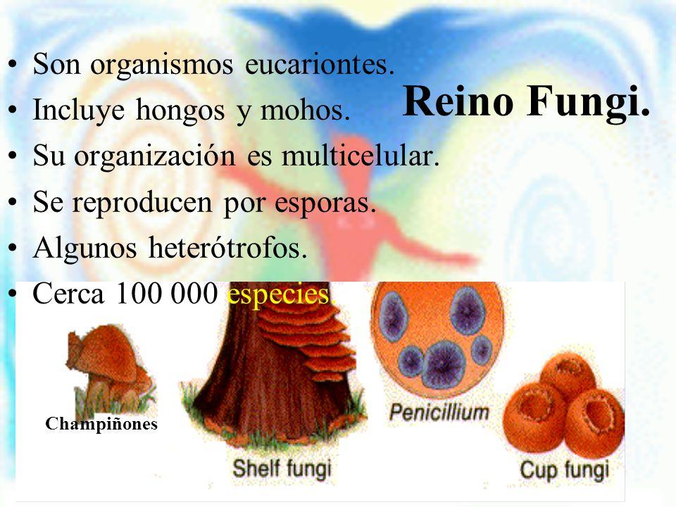 Reino Fungi. Son organismos eucariontes. Incluye hongos y mohos. Su organización es multicelular. Se reproducen por esporas. Algunos heterótrofos. Cer
