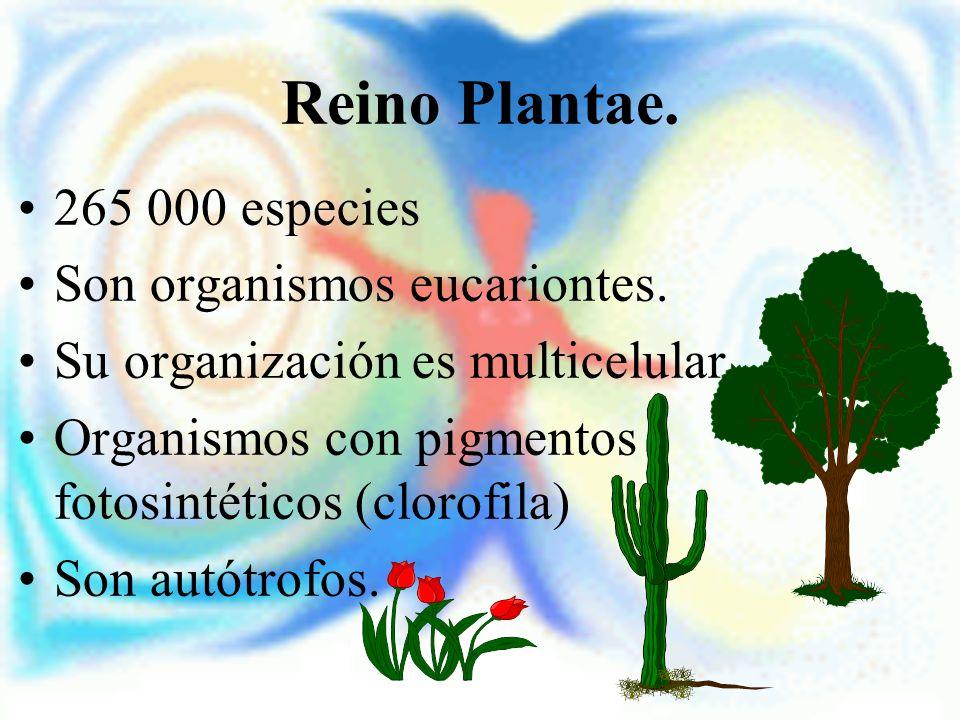Reino Plantae. 265 000 especies Son organismos eucariontes. Su organización es multicelular. Organismos con pigmentos fotosintéticos (clorofila) Son a