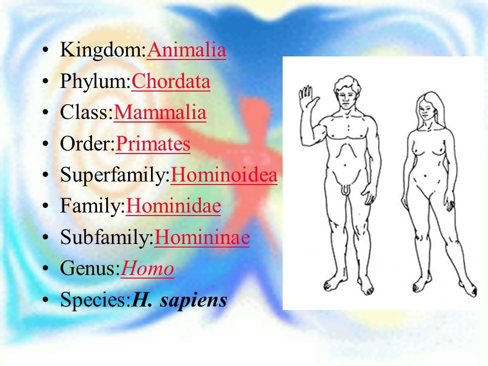 Kingdom:AnimaliaAnimalia Phylum:ChordataChordata Class:MammaliaMammalia Order:PrimatesPrimates Superfamily:HominoideaHominoidea Family:HominidaeHomini