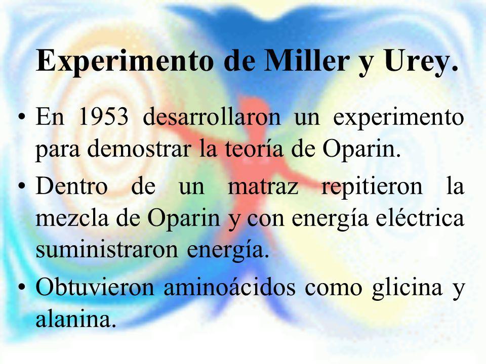 Experimento de Miller y Urey. En 1953 desarrollaron un experimento para demostrar la teoría de Oparin. Dentro de un matraz repitieron la mezcla de Opa