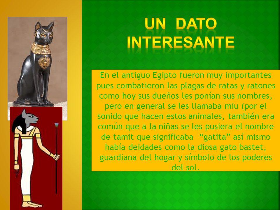 En el antiguo Egipto fueron muy importantes pues combatieron las plagas de ratas y ratones como hoy sus dueños les ponían sus nombres, pero en general
