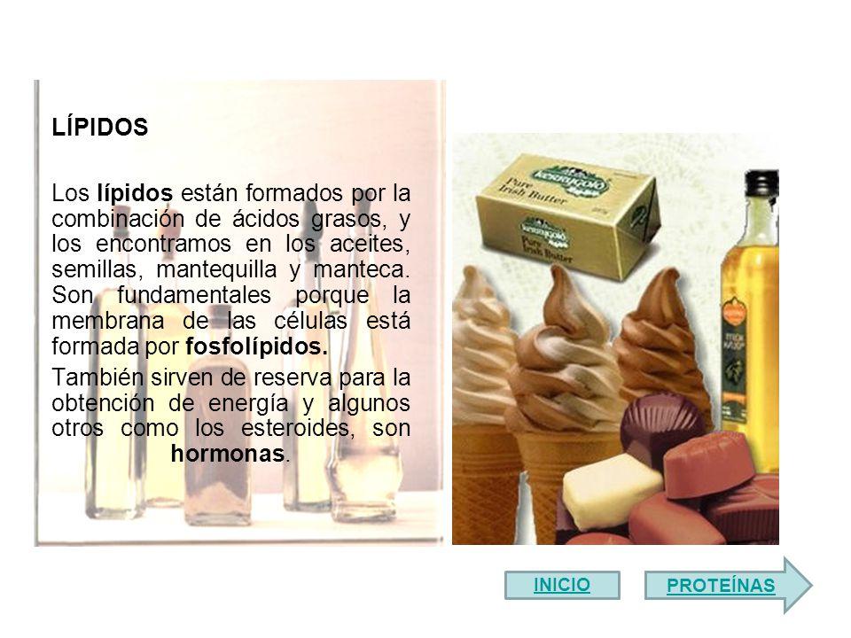 Los lípidos están formados por la combinación de ácidos grasos, y los encontramos en los aceites, semillas, mantequilla y manteca.