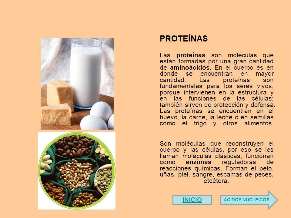 Las proteínas son moléculas que están formadas por una gran cantidad de aminoácidos.
