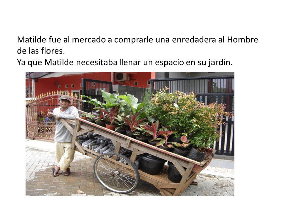 Matilde fue al mercado a comprarle una enredadera al Hombre de las flores. Ya que Matilde necesitaba llenar un espacio en su jardín.