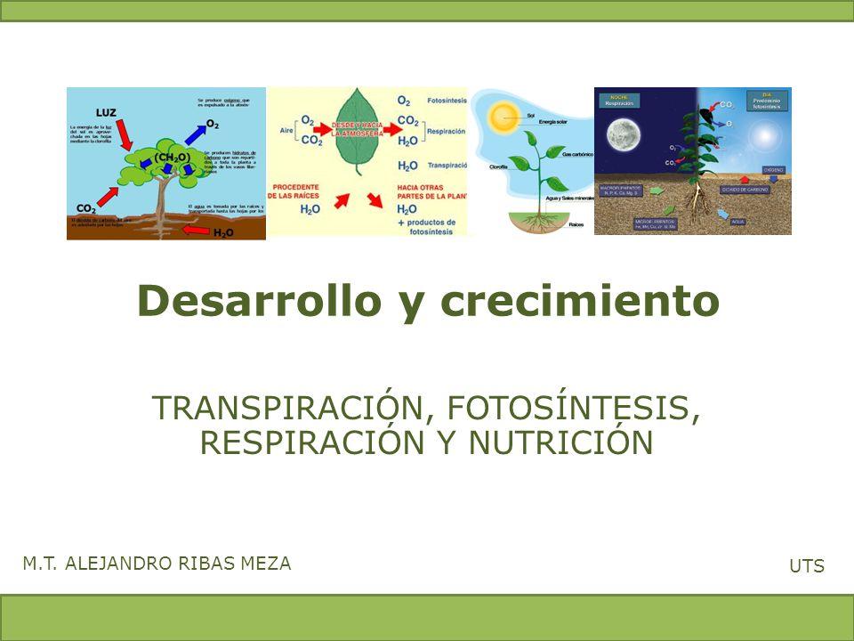 Desarrollo y crecimiento TRANSPIRACIÓN, FOTOSÍNTESIS, RESPIRACIÓN Y NUTRICIÓN M.T. ALEJANDRO RIBAS MEZA UTS
