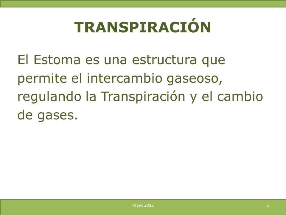 El Estoma es una estructura que permite el intercambio gaseoso, regulando la Transpiración y el cambio de gases. Mayo 20125 TRANSPIRACIÓN