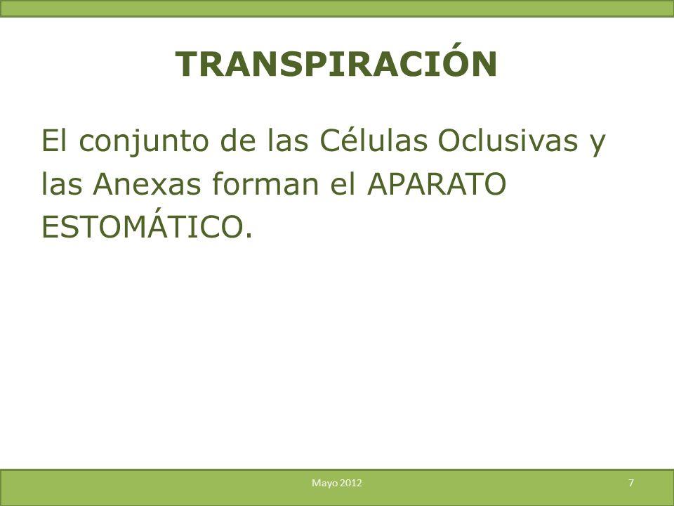 El conjunto de las Células Oclusivas y las Anexas forman el APARATO ESTOMÁTICO. Mayo 20127 TRANSPIRACIÓN